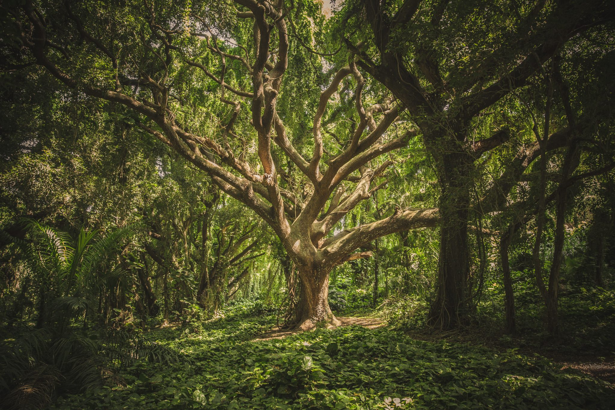 Significado del árbol de la vida para este 2020
